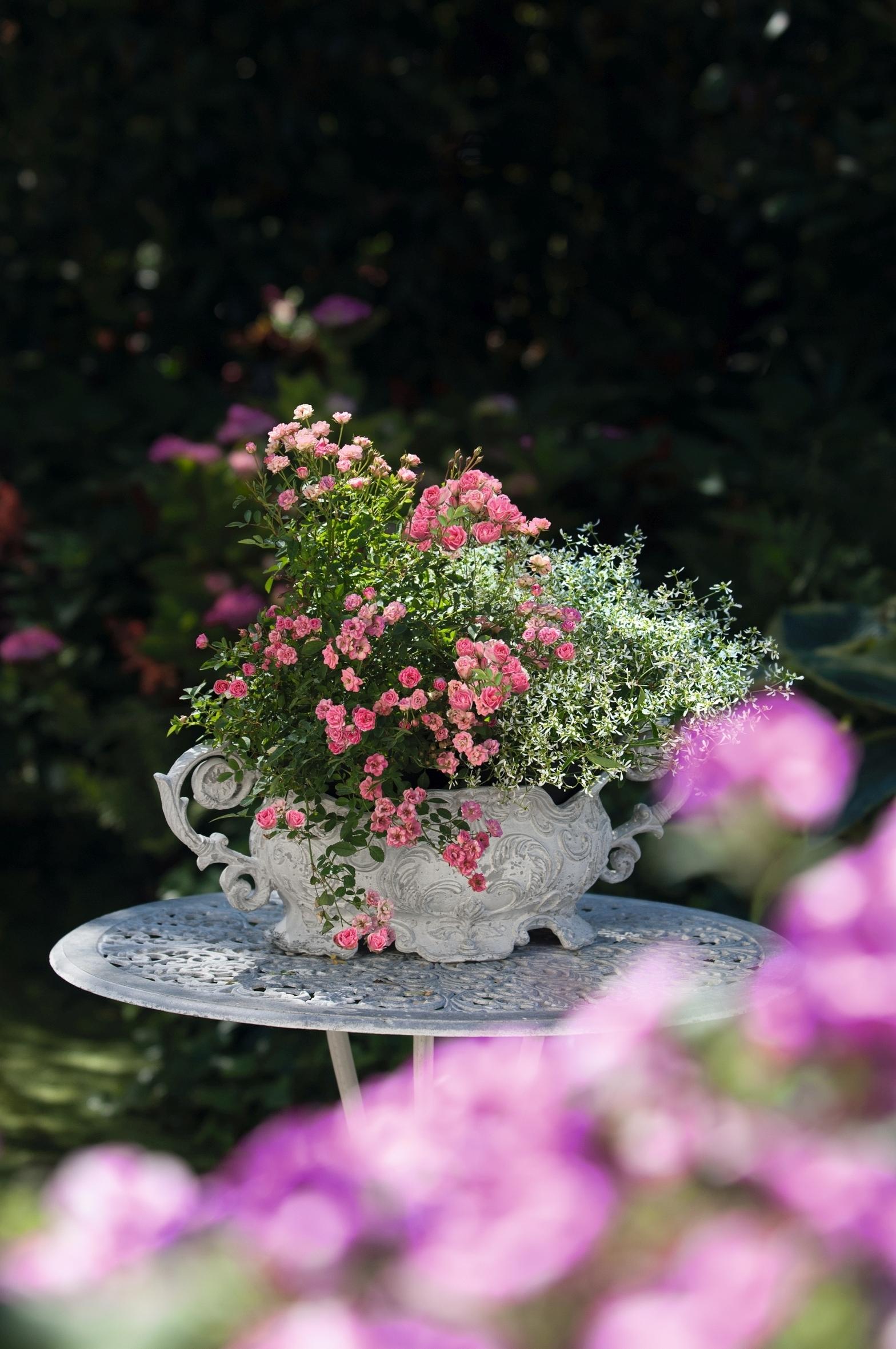 Bezaubernde LillyRose: Rosenneuheit verwandelt Balkon und Terrasse in Blüten-Oasen