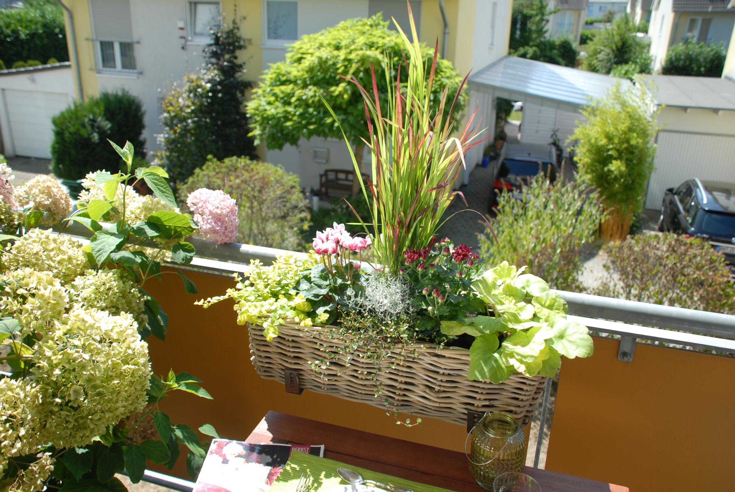 Den Ausblick genießen: Herbstliche Pflanzen-Dekos schmücken selbst den kleinsten Balkon