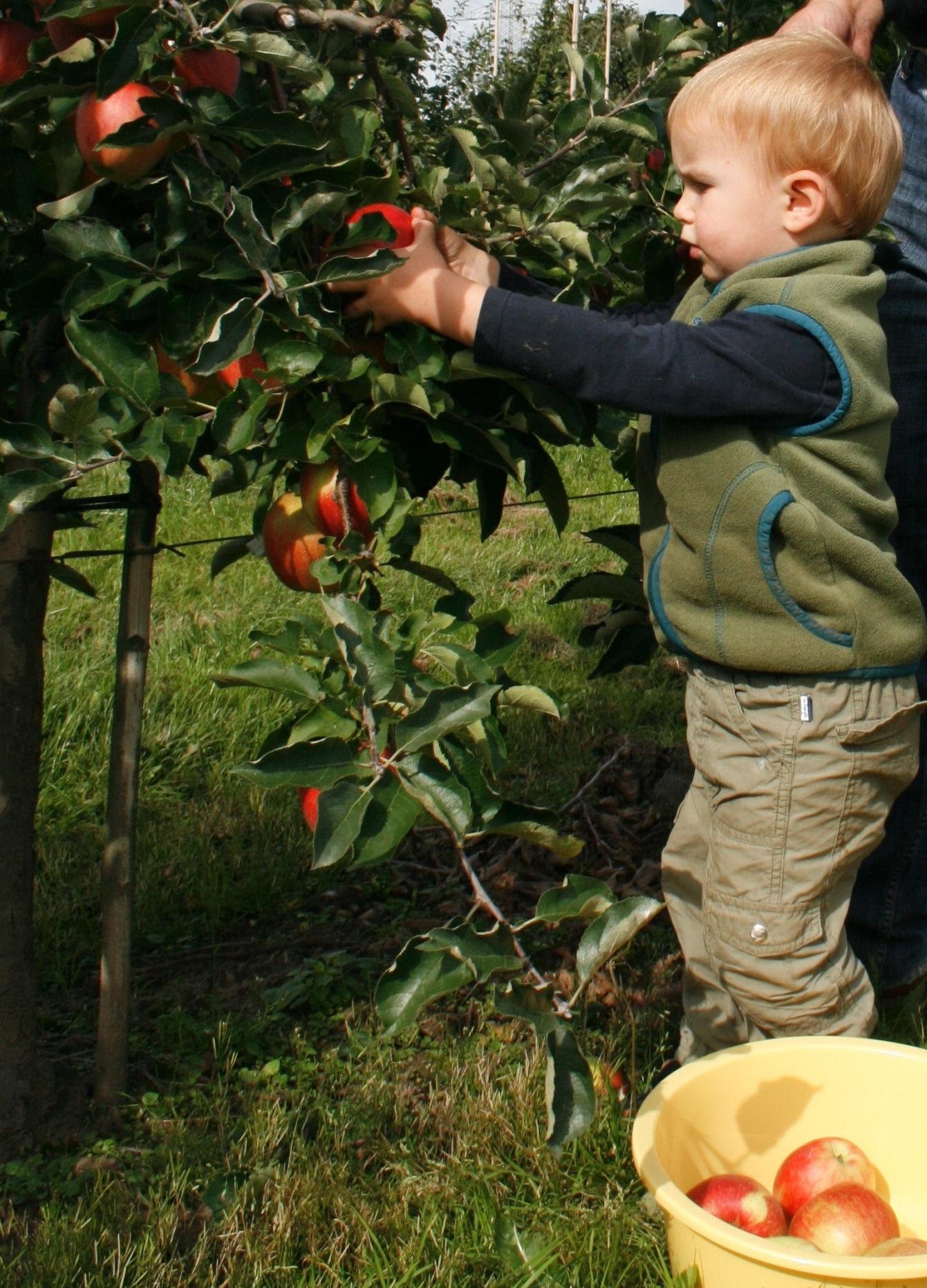 Auch Apfelsorten unterliegen der Mode