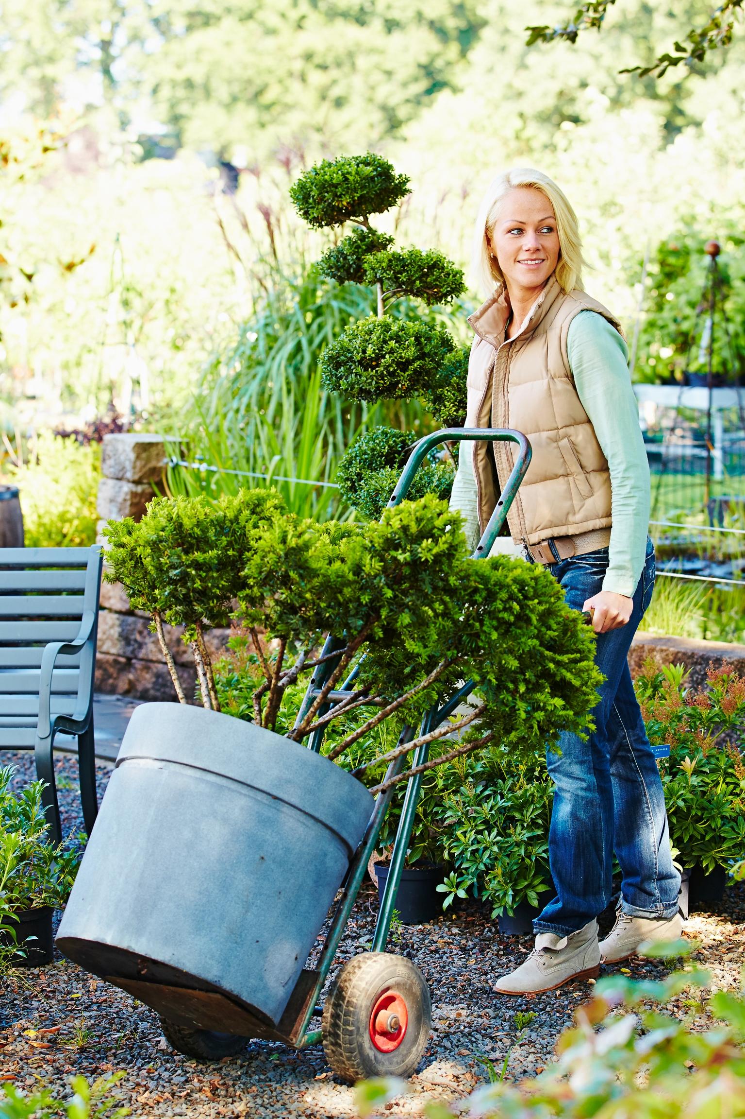 Wie Kübelpflanzen unbeschadet den Winter überstehen