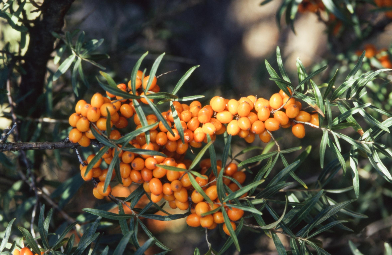Wertvolle Blüten und Früchte: Diese Gehölze bieten bestes Wildtierfutter