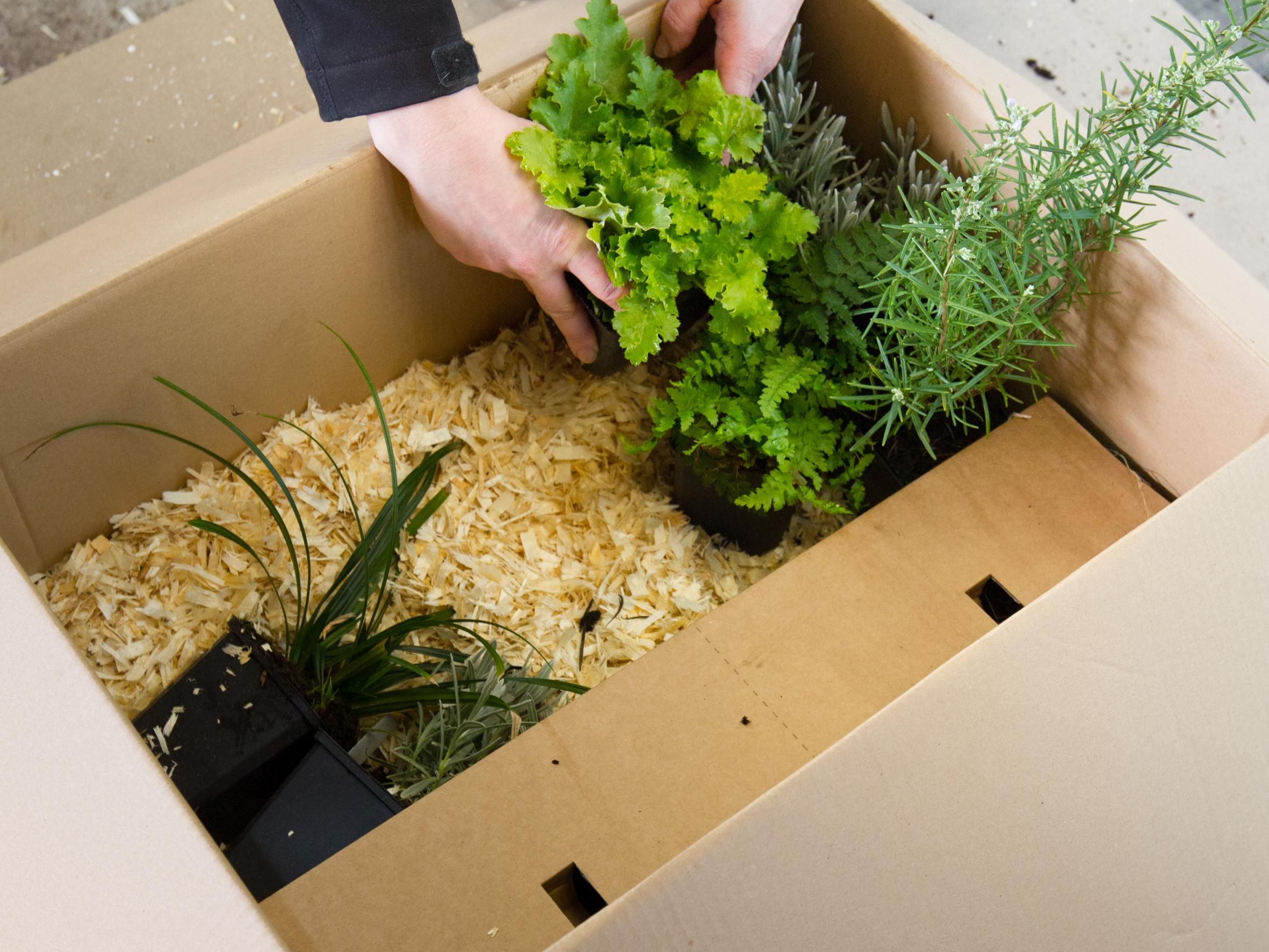 """Weitere Bilder zu """"Pflanzen online kaufen: eine gute Idee?"""