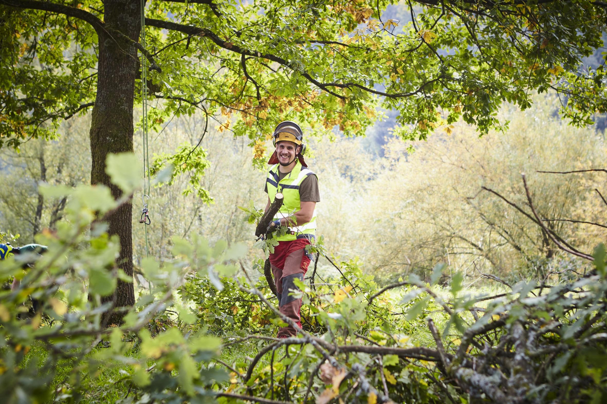 Baumpfleger / Baumpflegerin: Grüner Traumjob für Aktive