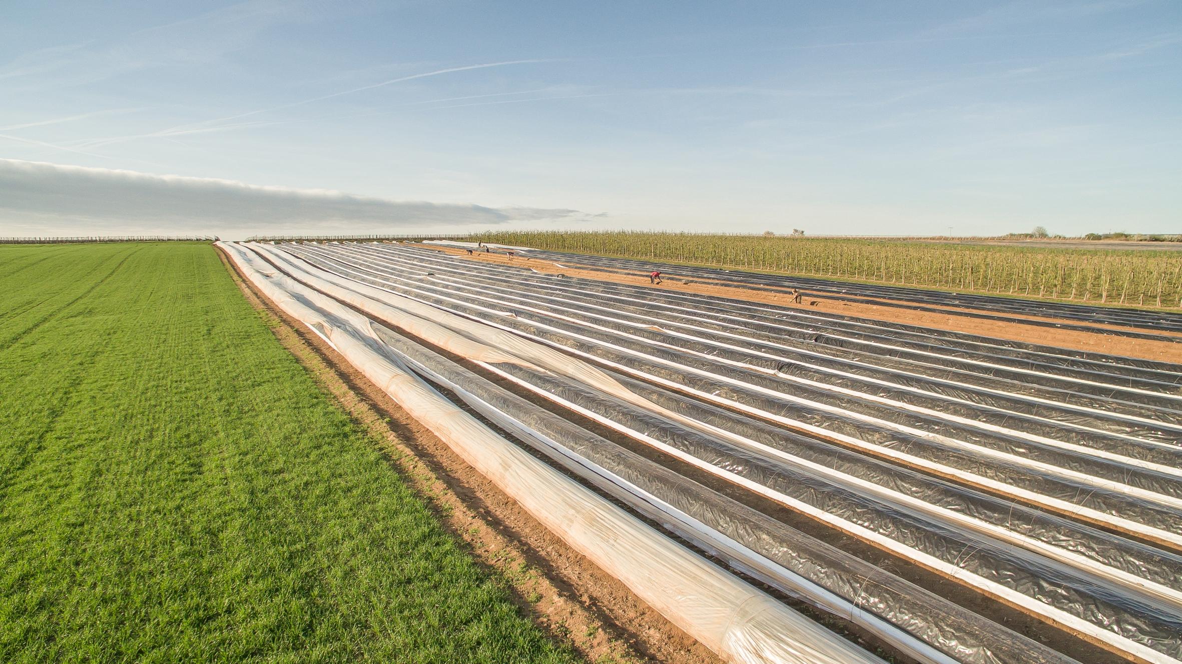 Weltwassertag: Wie Spargelanbauer die Feuchtigkeit im Boden halten