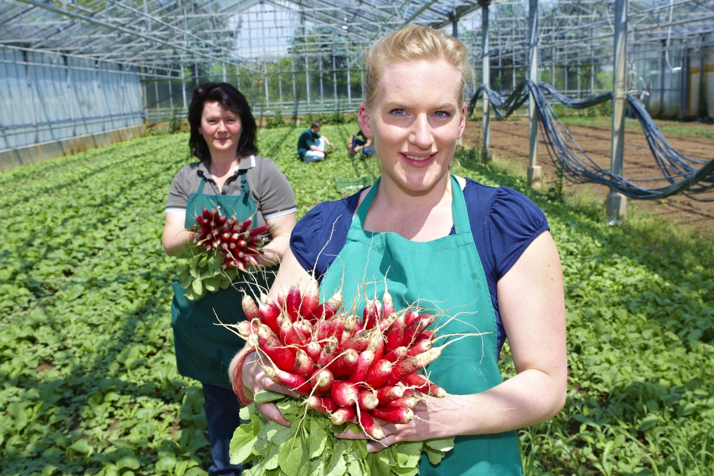 Gemüse aus deutschem Anbau: Beste Qualität durch optimale Nährstoffversorgung