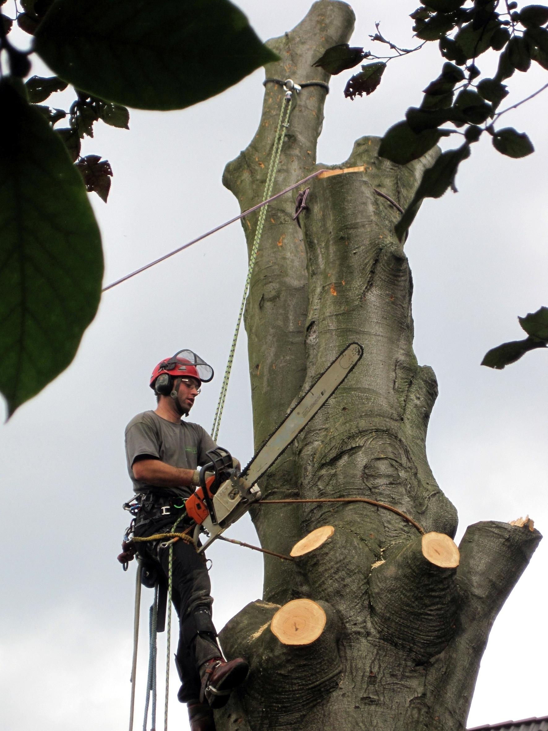 Schneiden und Fällen auf engstem Raum:  Von Baum zu Baum im Großstadtdschungel