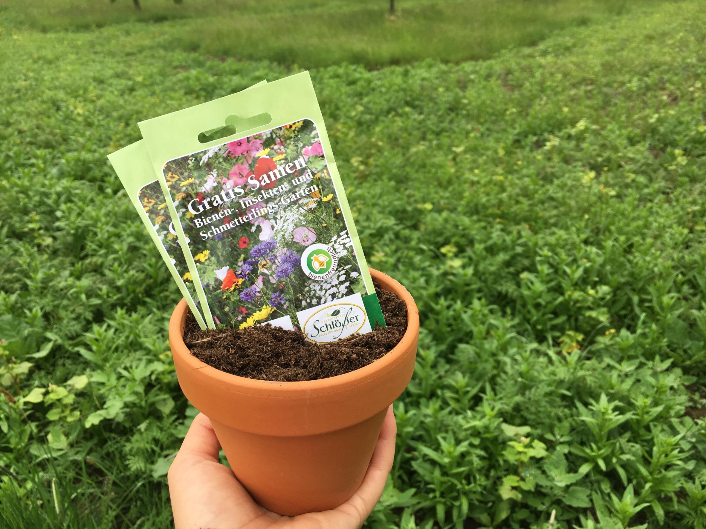 Atemberaubend Kinderleicht: Mit Blumenwiesen Bienen retten - Das Grüne Medienhaus @YN_95