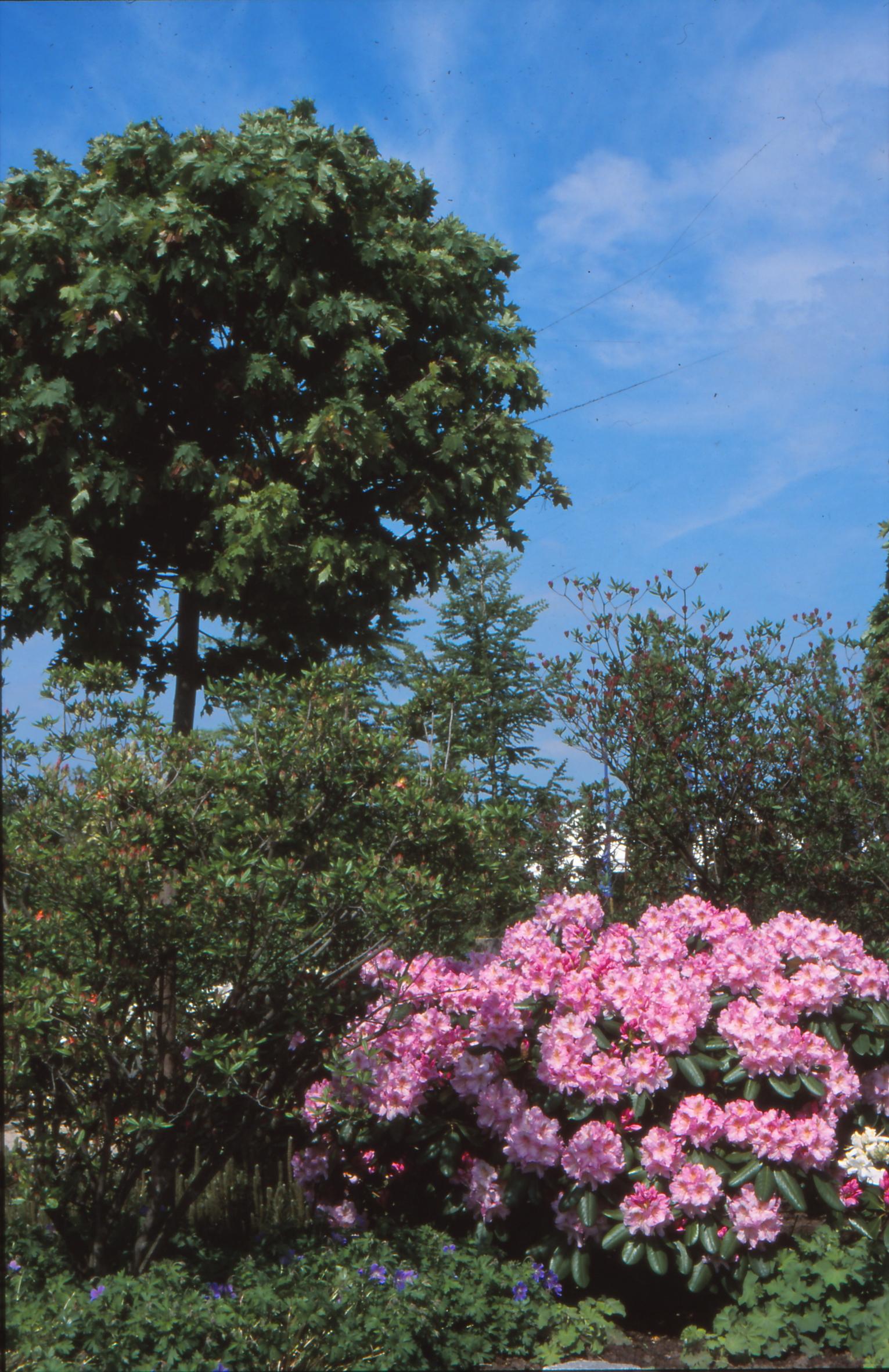 Grüne Schattenspender: Unter Bäumen und Sträuchern lässt es sich gut im Sommer aushalten