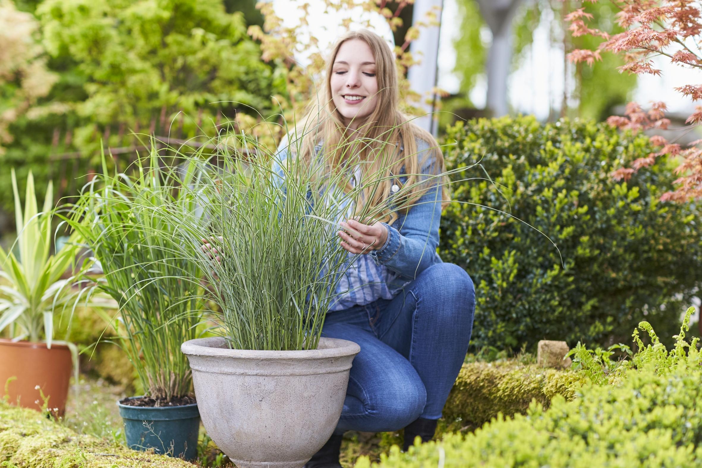 Filigran und doch erstaunlich robust: Ziergräser sind Allroundkünstler für Garten und Balkon