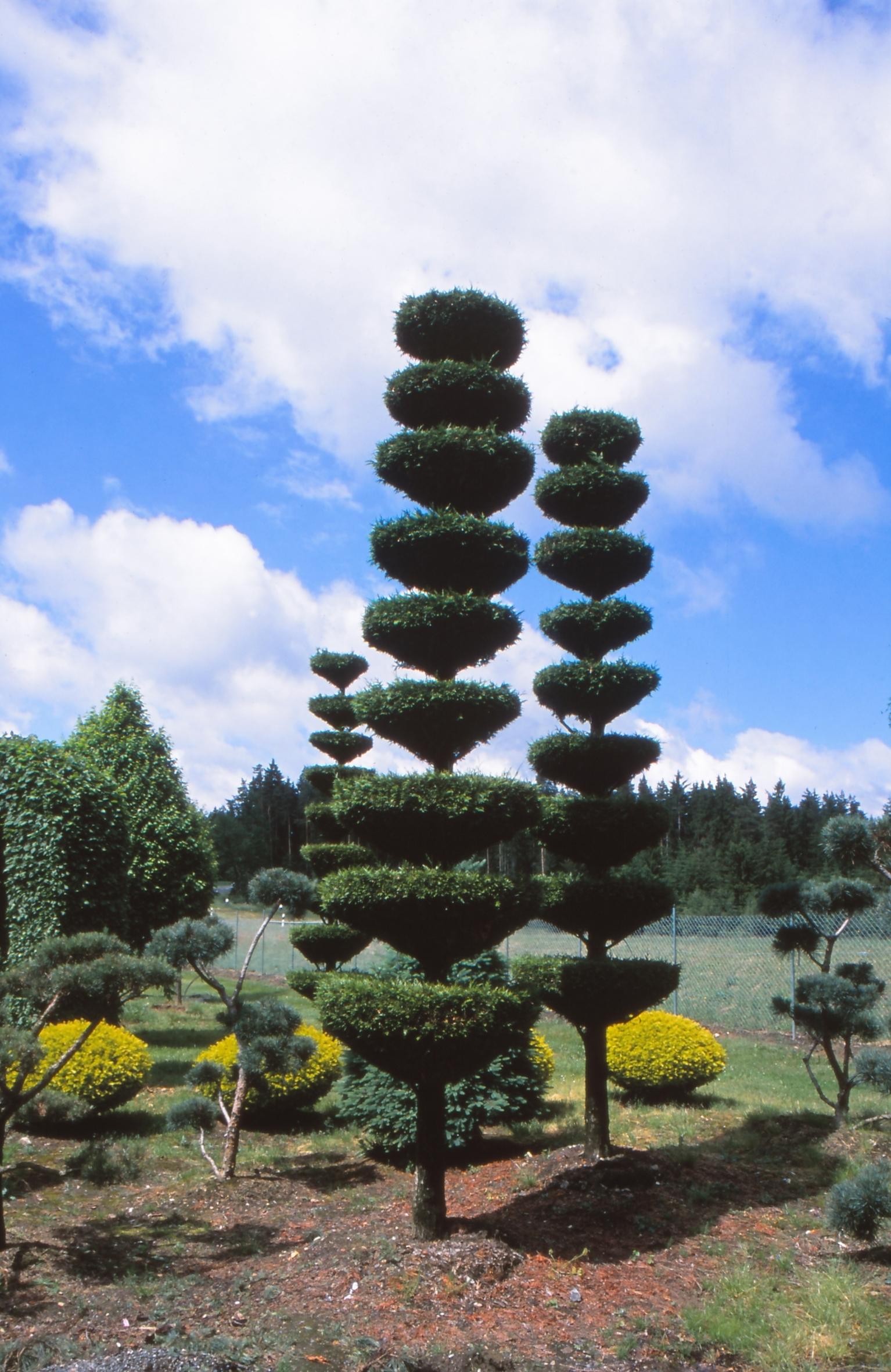 Von klassisch bis modern: Formgehölze bringen Extravaganz in jeden Garten