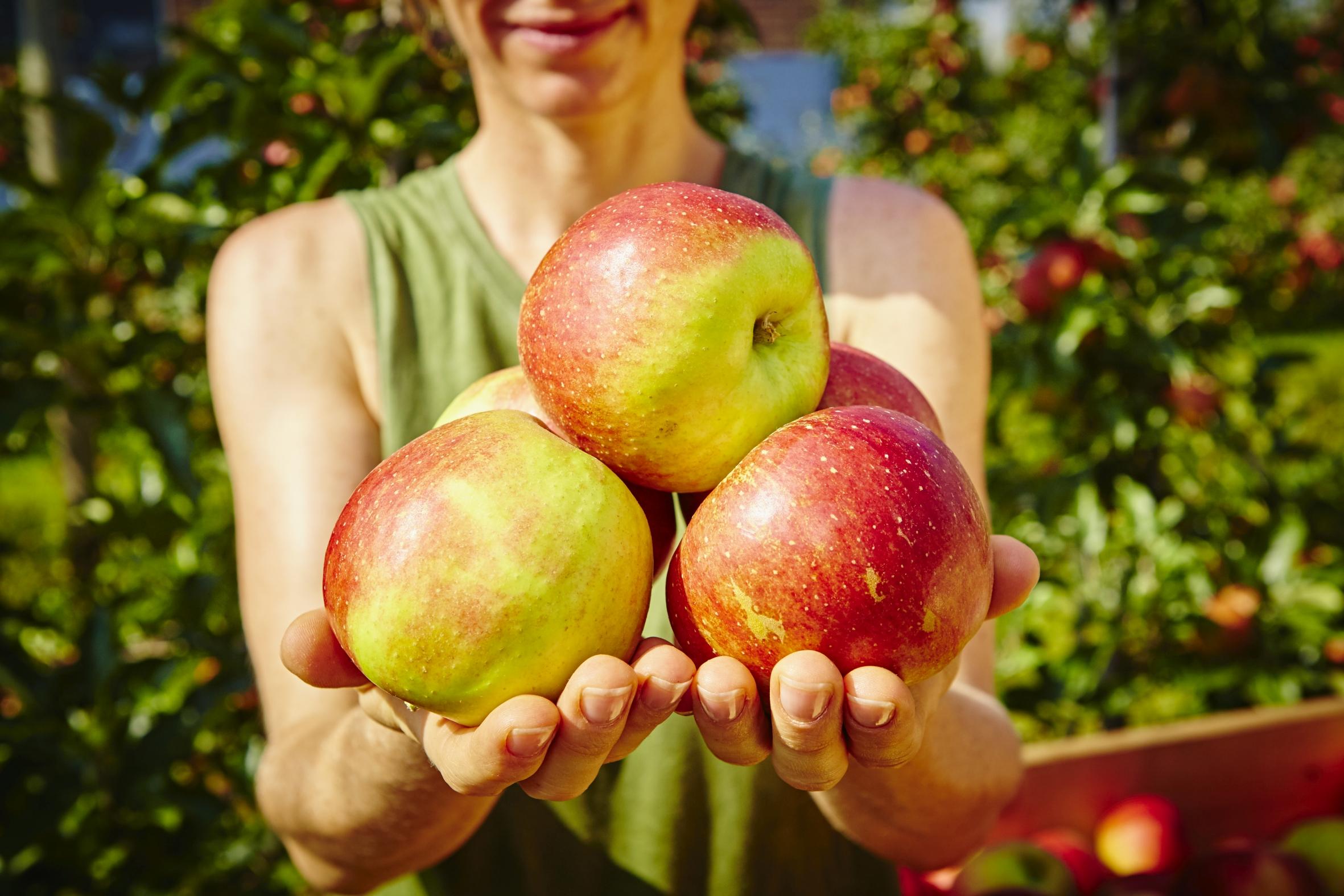 Jetzt erntereife Äpfel und Birnen aus deutschem Anbau genießen – und damit die Artenvielfalt fördern!
