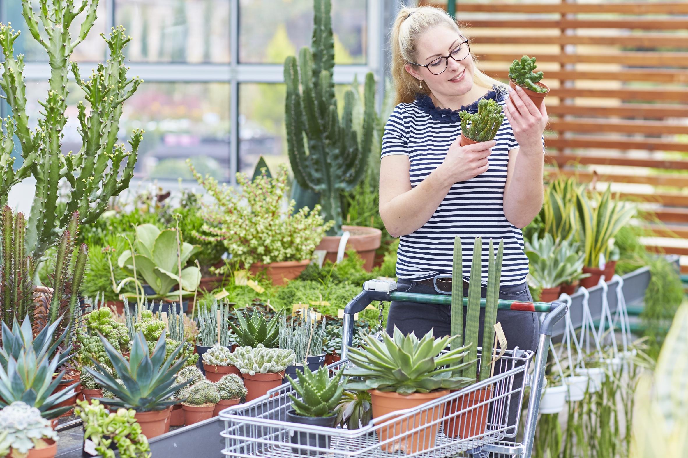Ganz schön trendig: Zimmerpflanzen im Retrolook