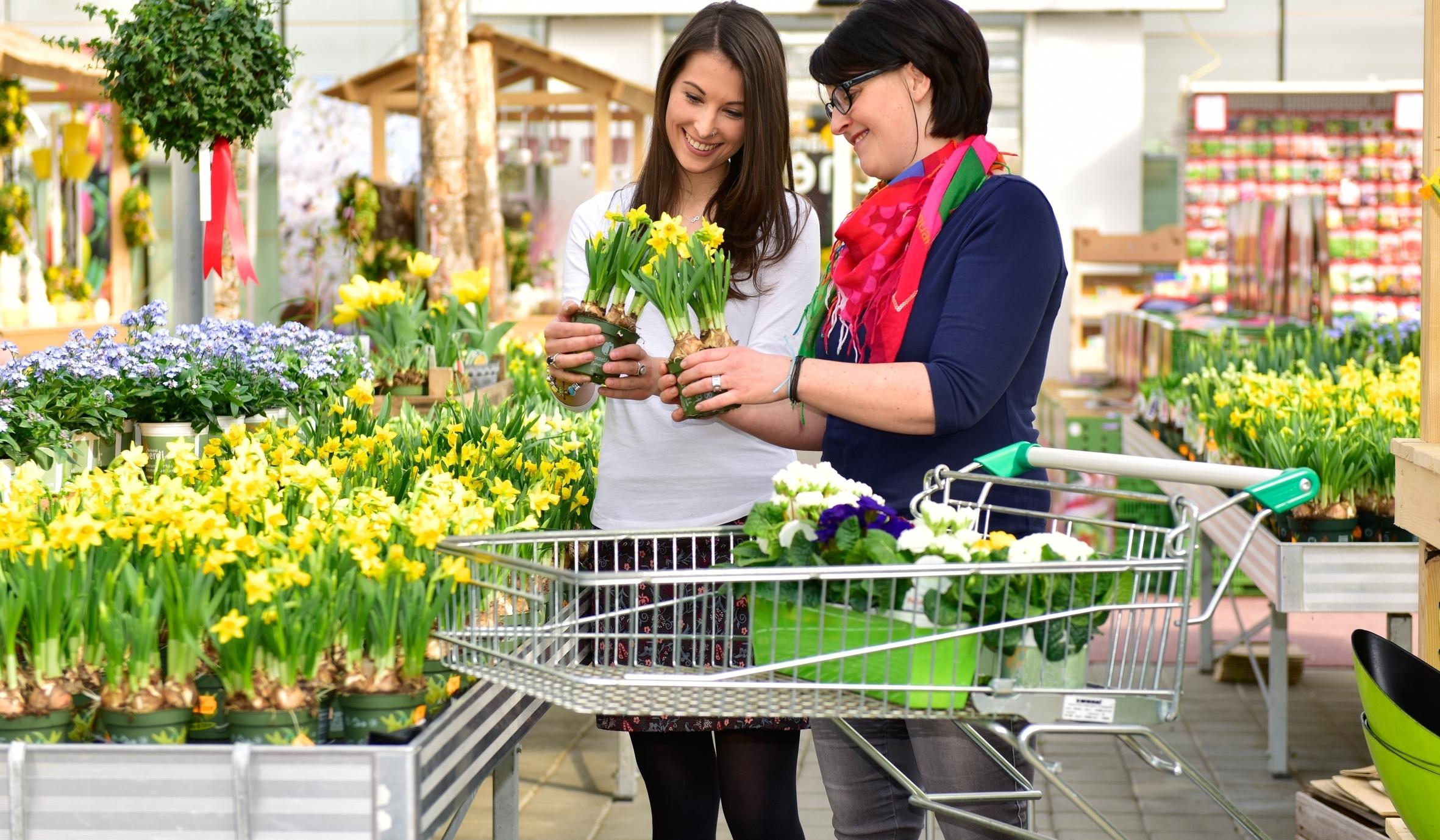 Erblühtes Glück: Mit farbenfrohen Frühlingsboten das Ende des Winters feiern