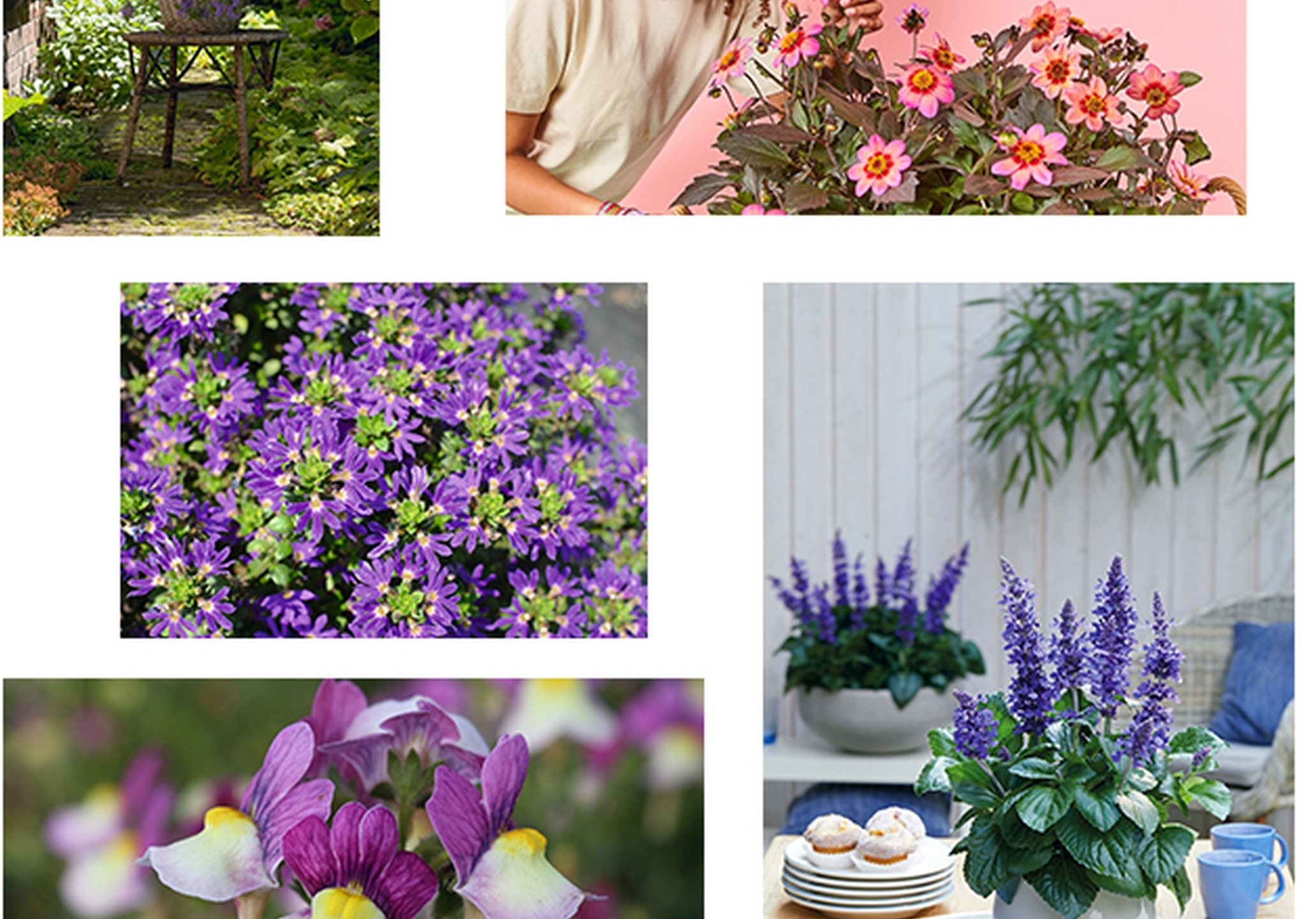 Balkonpflanzen des Jahres: Üppige Blütenpracht und Nahrungsquellen für Insekten