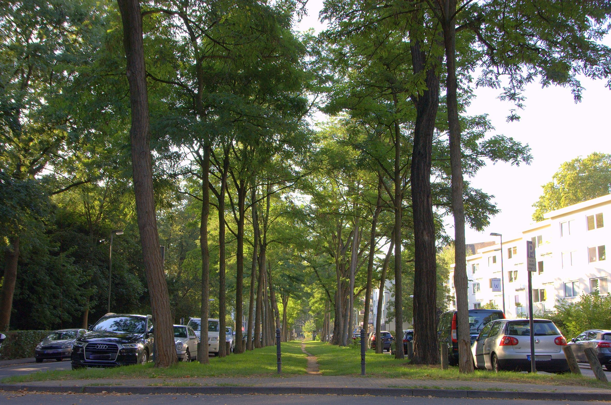 Die Stadt – ein Albtraum für Bäume