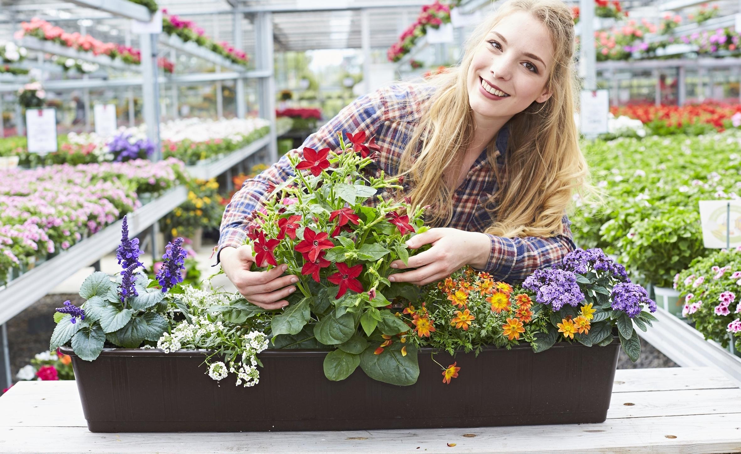 Jetzt richtig pflanzen: So machen Sommerblumen lange Freude