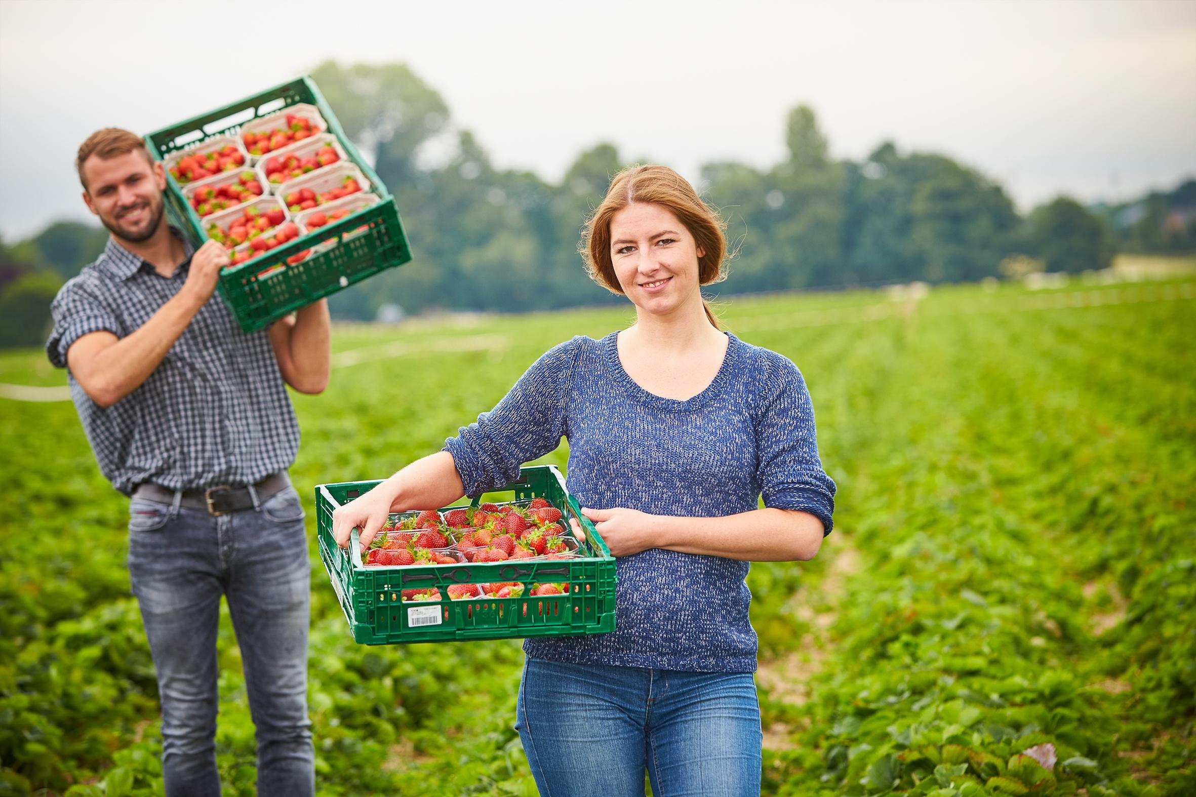 Deutsche Erdbeeren: Lecker, gesund und ab sofort zu haben