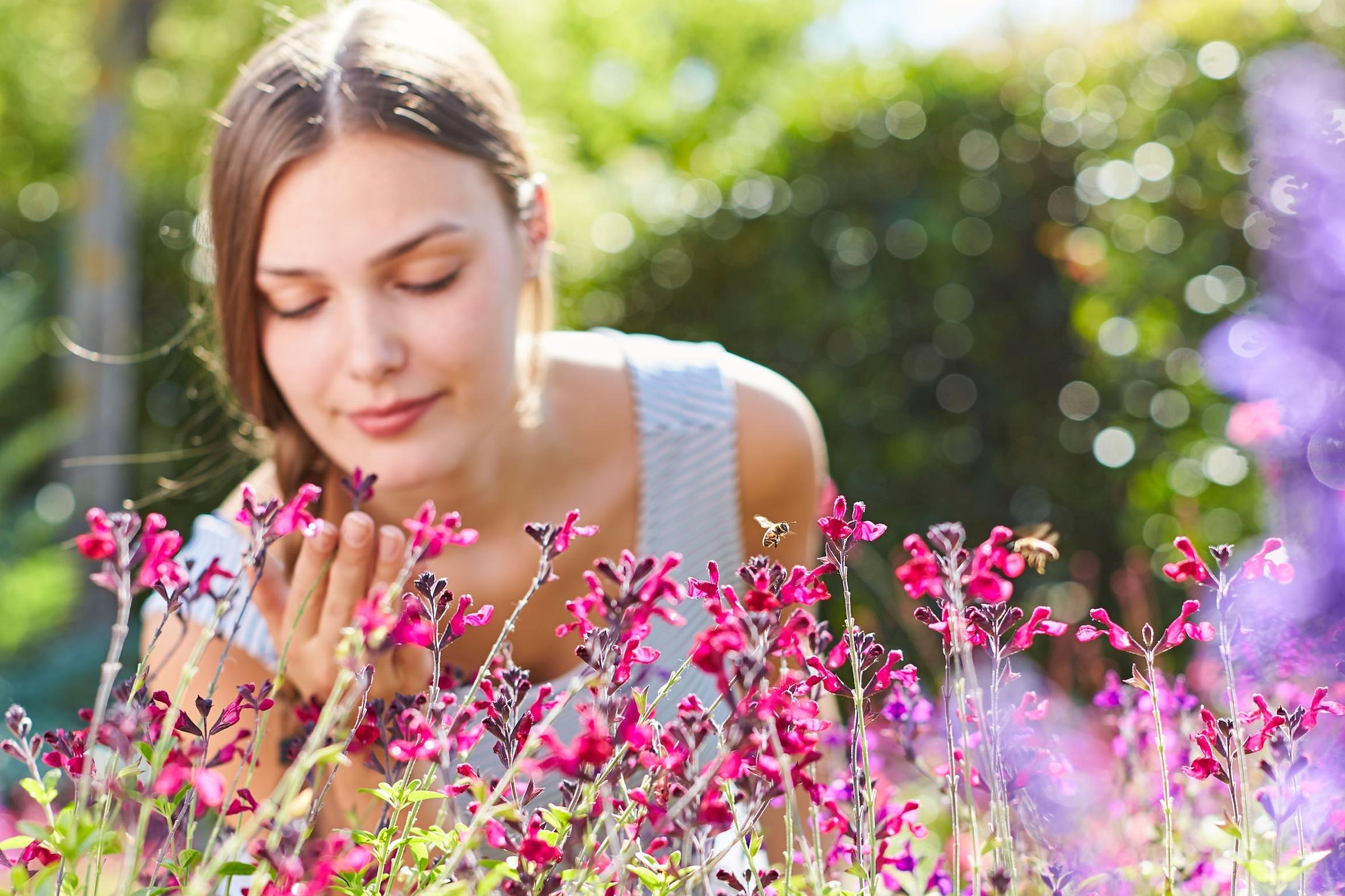 Farbe, Duft und Lebensfreude: Diese Blütenträume locken Insekten an