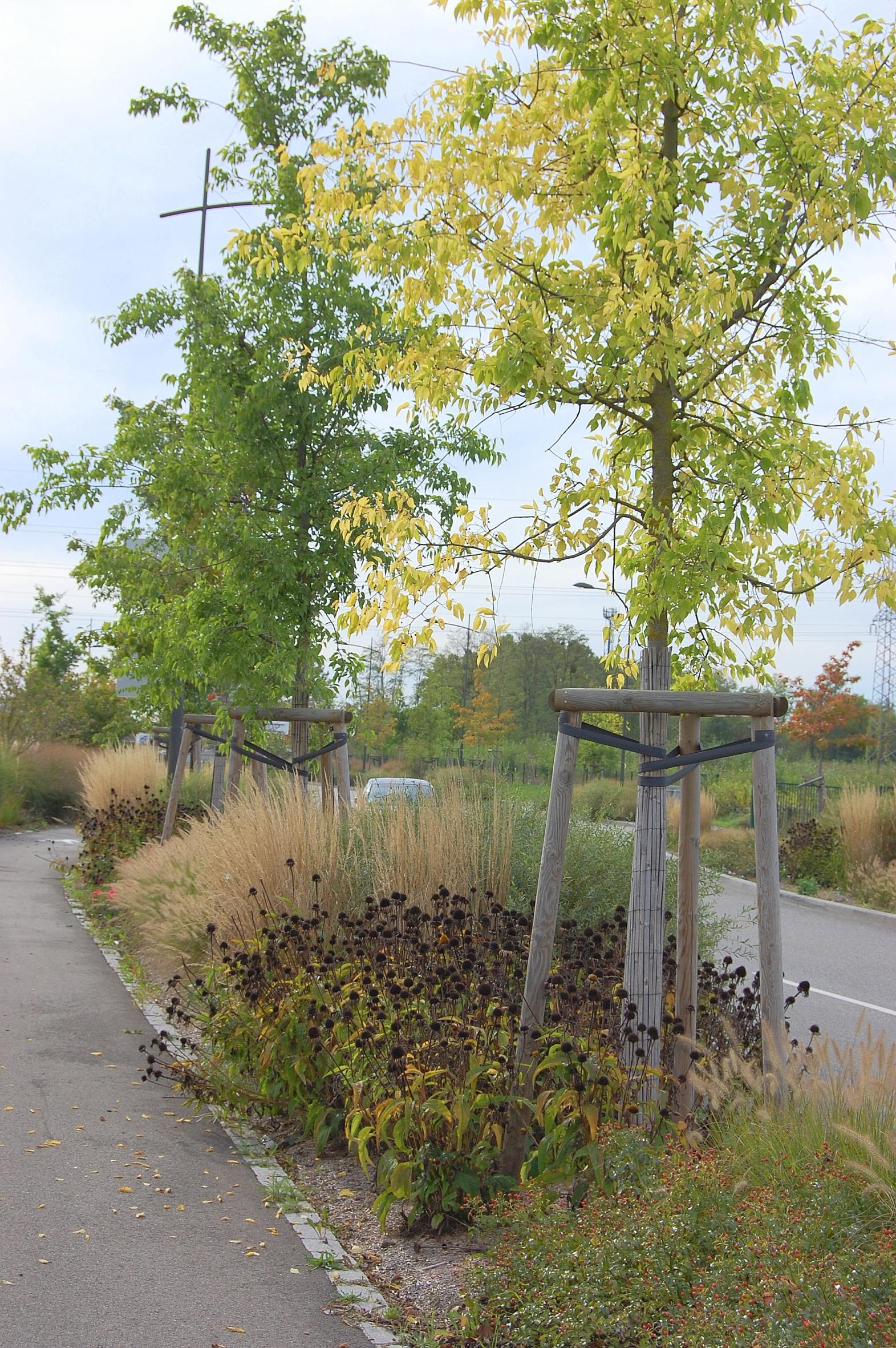 """Weitere Bilder zu """"Bäume in der Stadt: Der Mix macht's"""""""