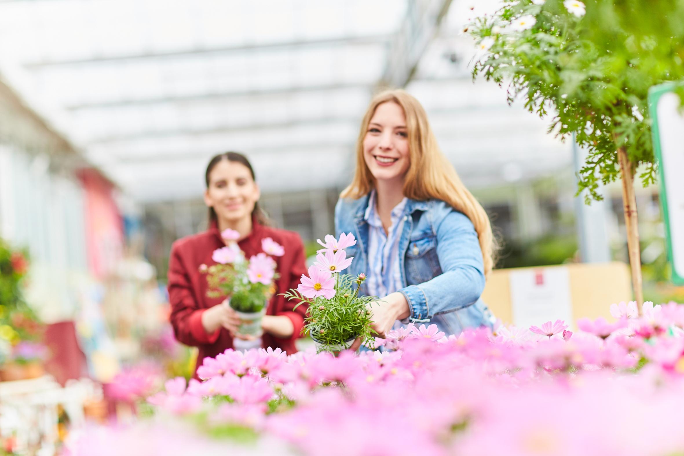 Insektenschmaus vom Feinsten: Premium-Gärtnereien bieten höchste Qualität und kompetente Beratung