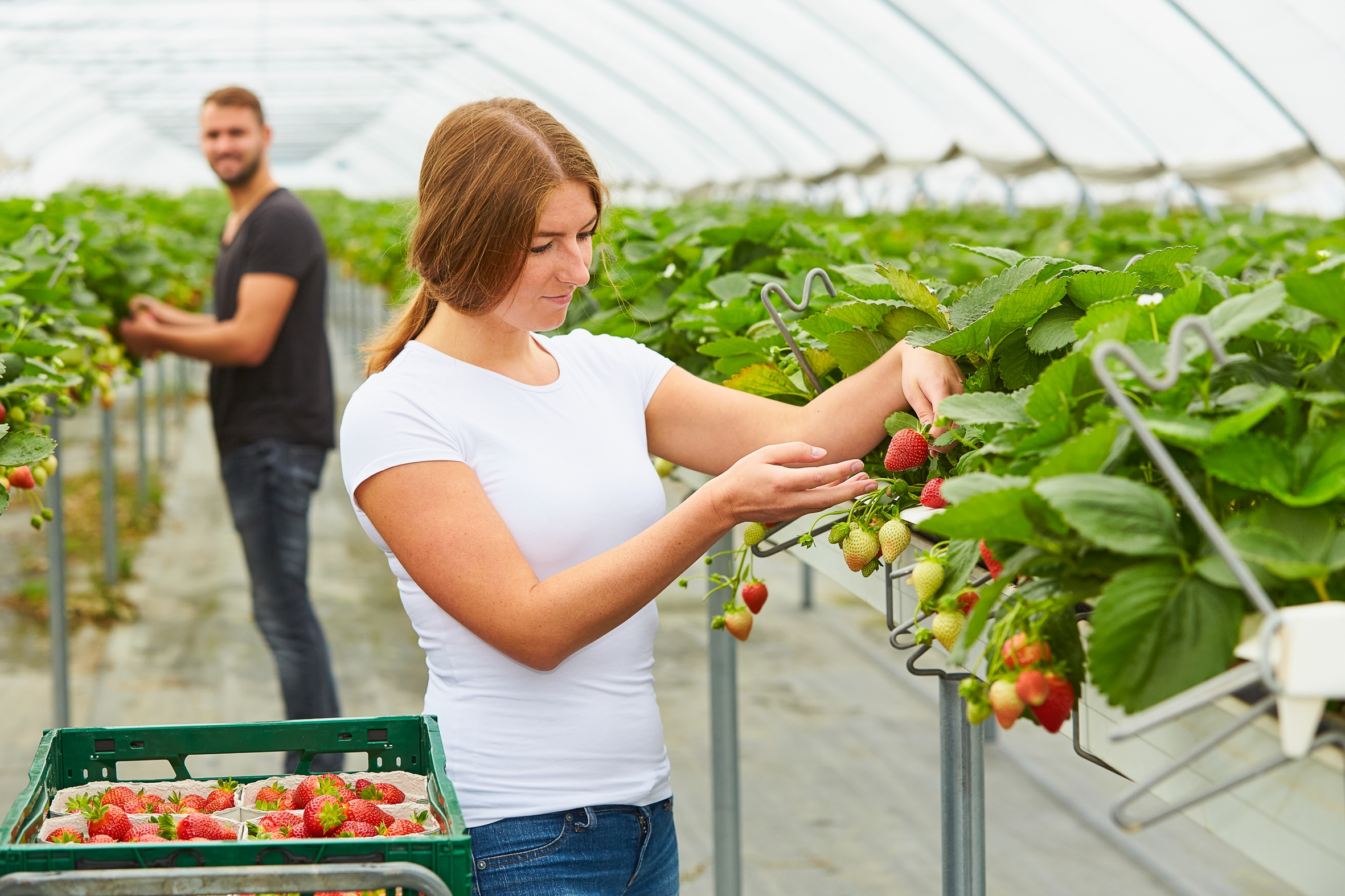 Sieben kuriose Fakten aus der Pflanzenwelt