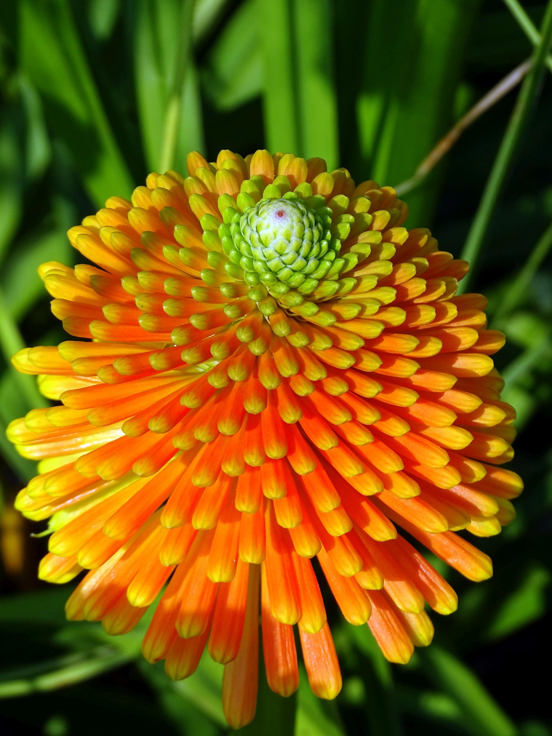 Faszinierendes Design: Können Pflanzen rechnen?