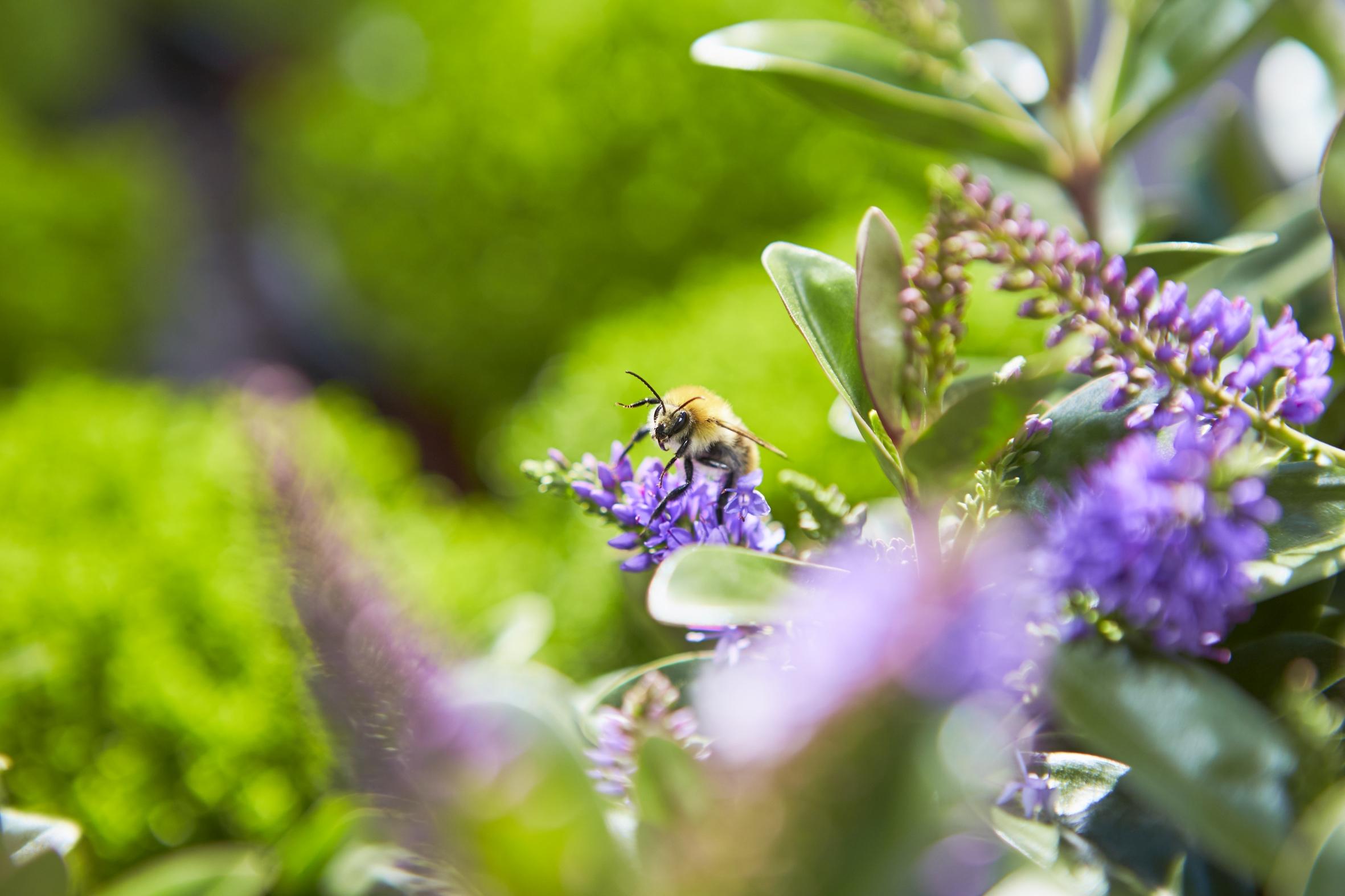Jetzt noch mal Insekten füttern – Gärtner machen es möglich