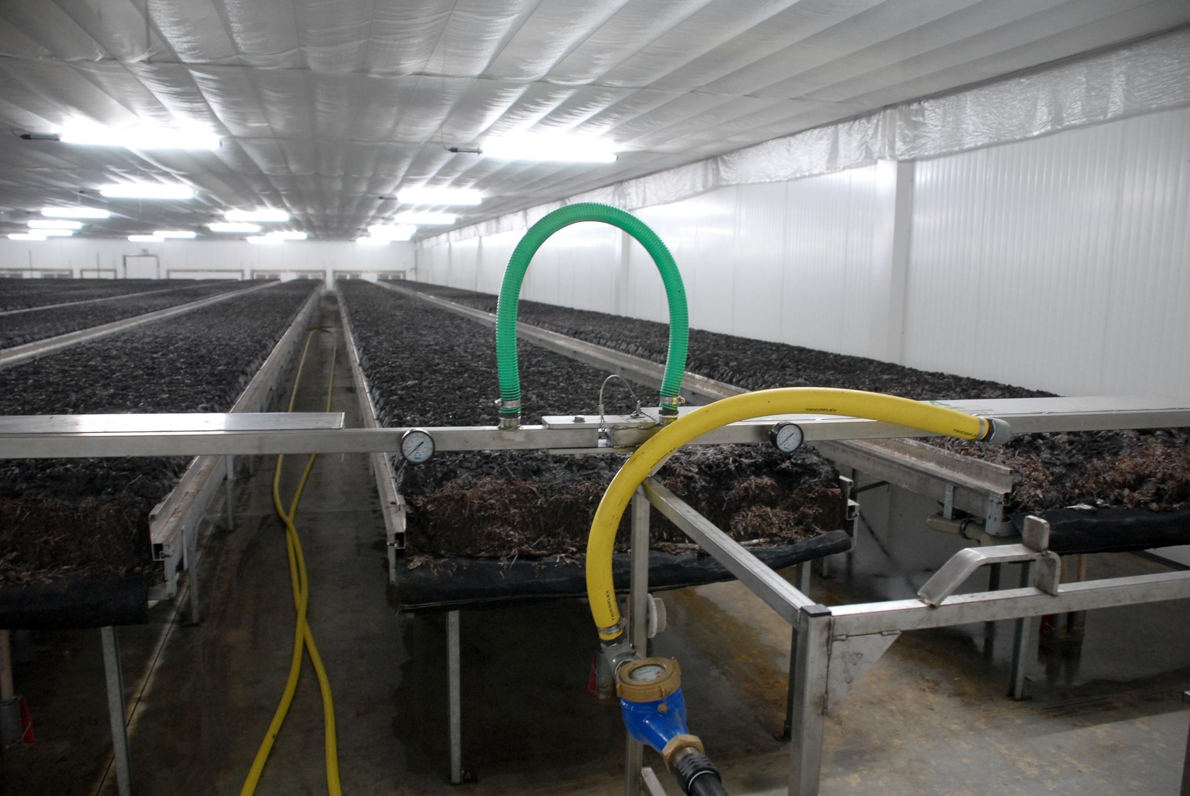 Kostbares Wasser – für Pilzkulturen sparsam eingesetzt