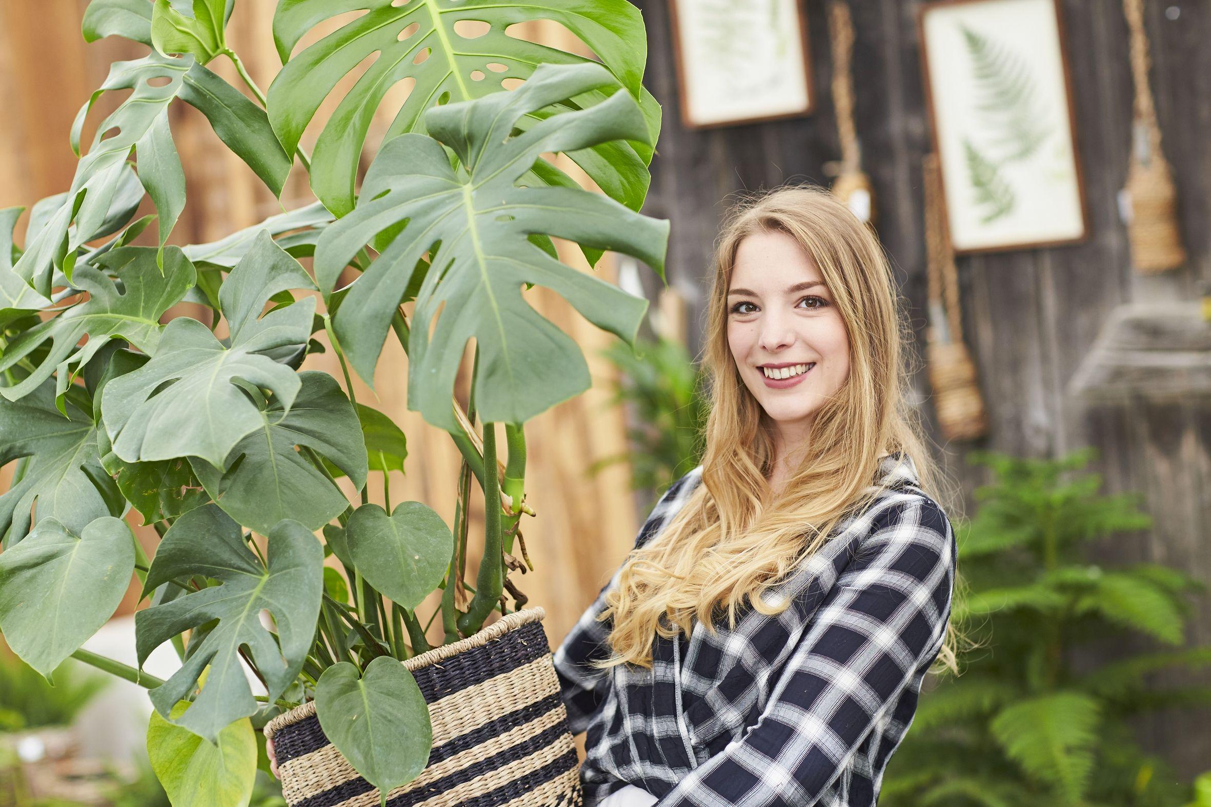Natur für drinnen: Mit Zimmerpflanzen lebt es sich besser!