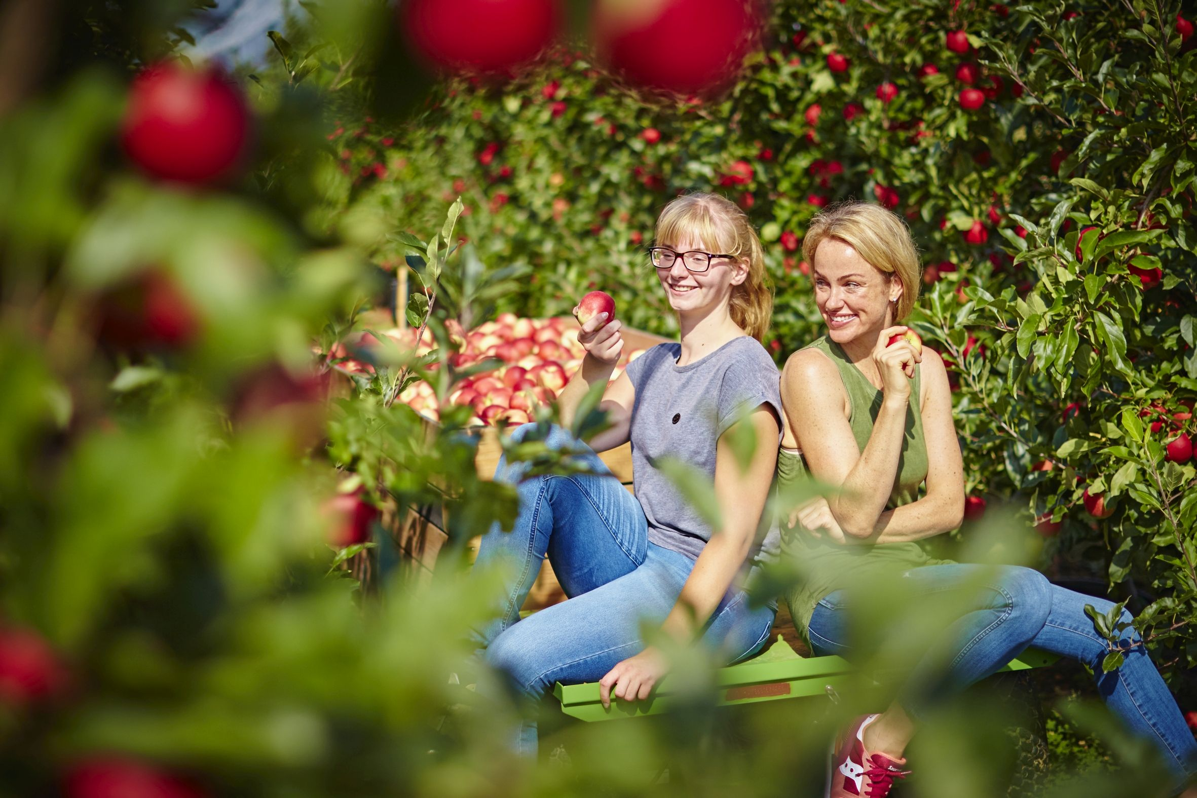 Deutsche Äpfel: Auch für Klima und Umwelt die bessere Wahl