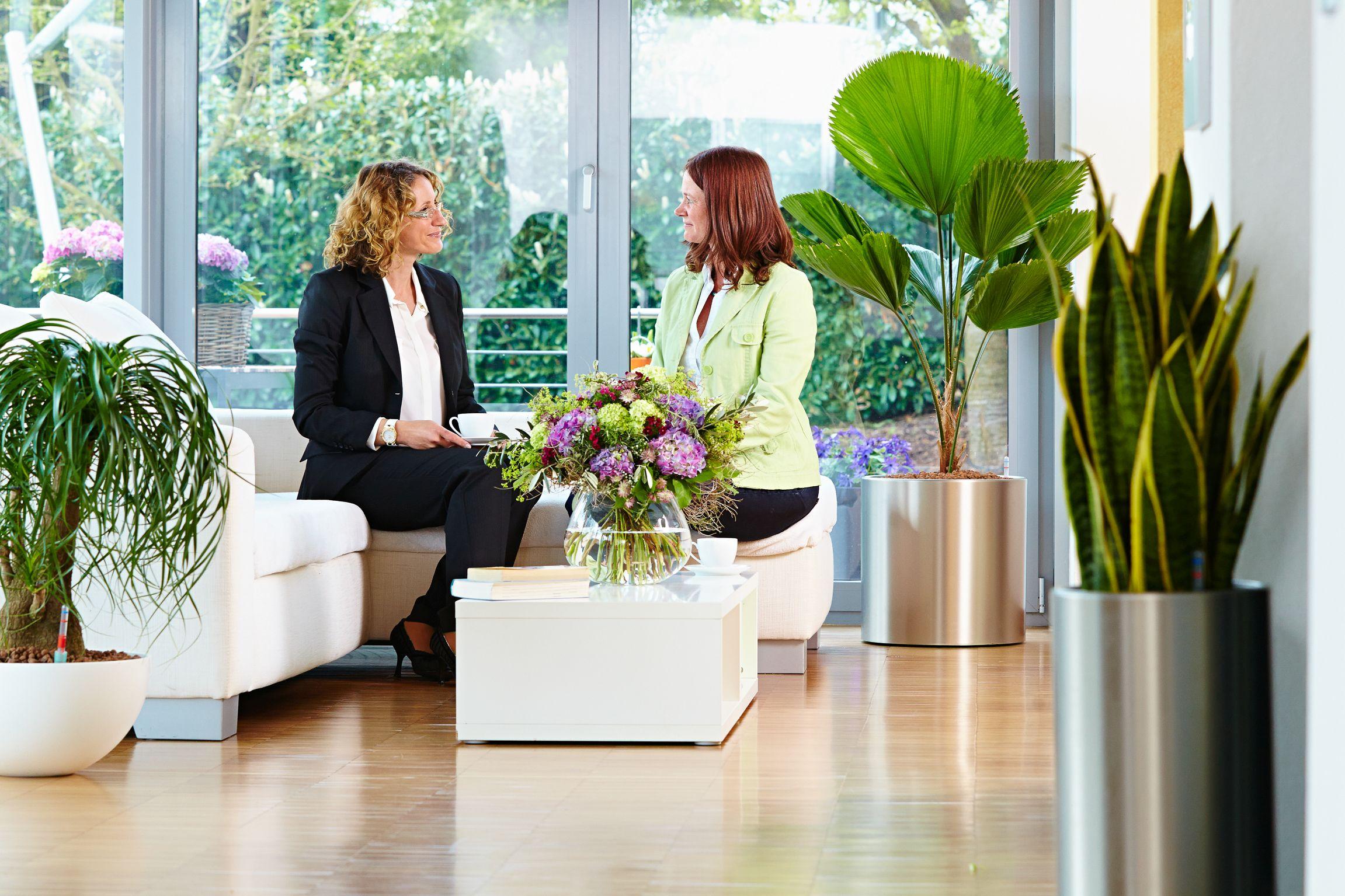 Für mehr Grün: Zimmerpflanzen sorgen für Behaglichkeit