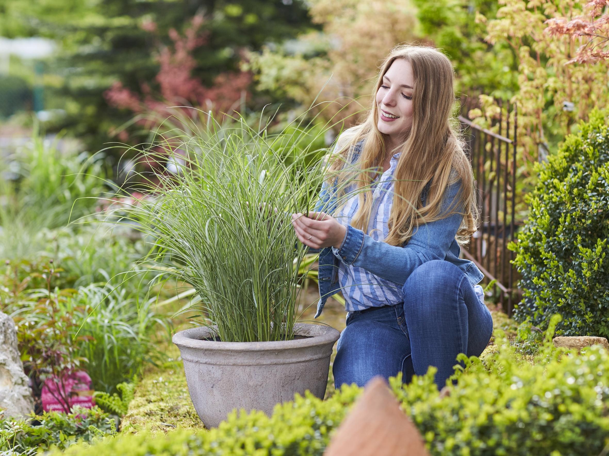 Quelle der Freude: Blumen und Pflanzen stärken das seelische Wohlbefinden