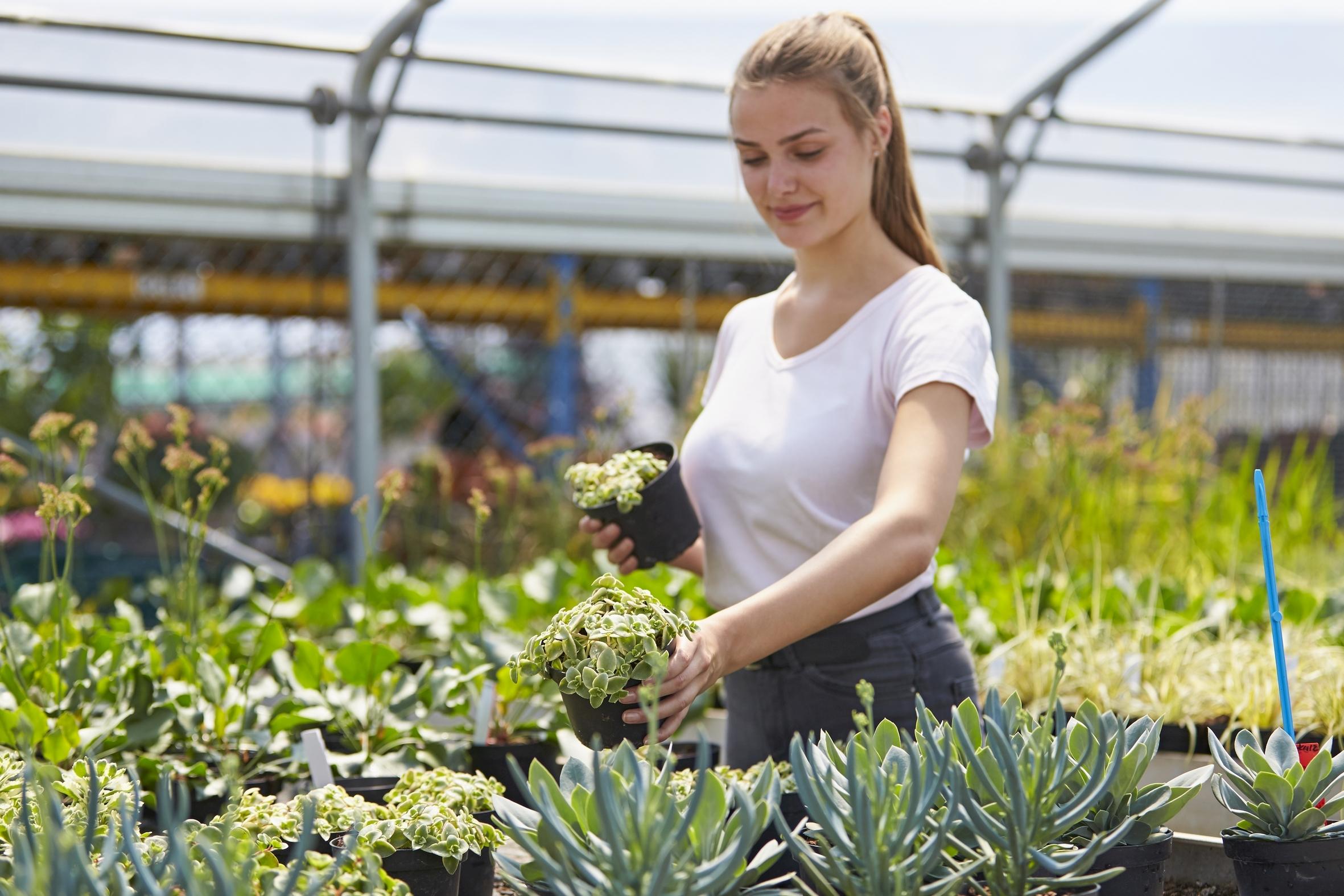 Voll im Trend: Gärtner:innen sind am Puls der Zeit