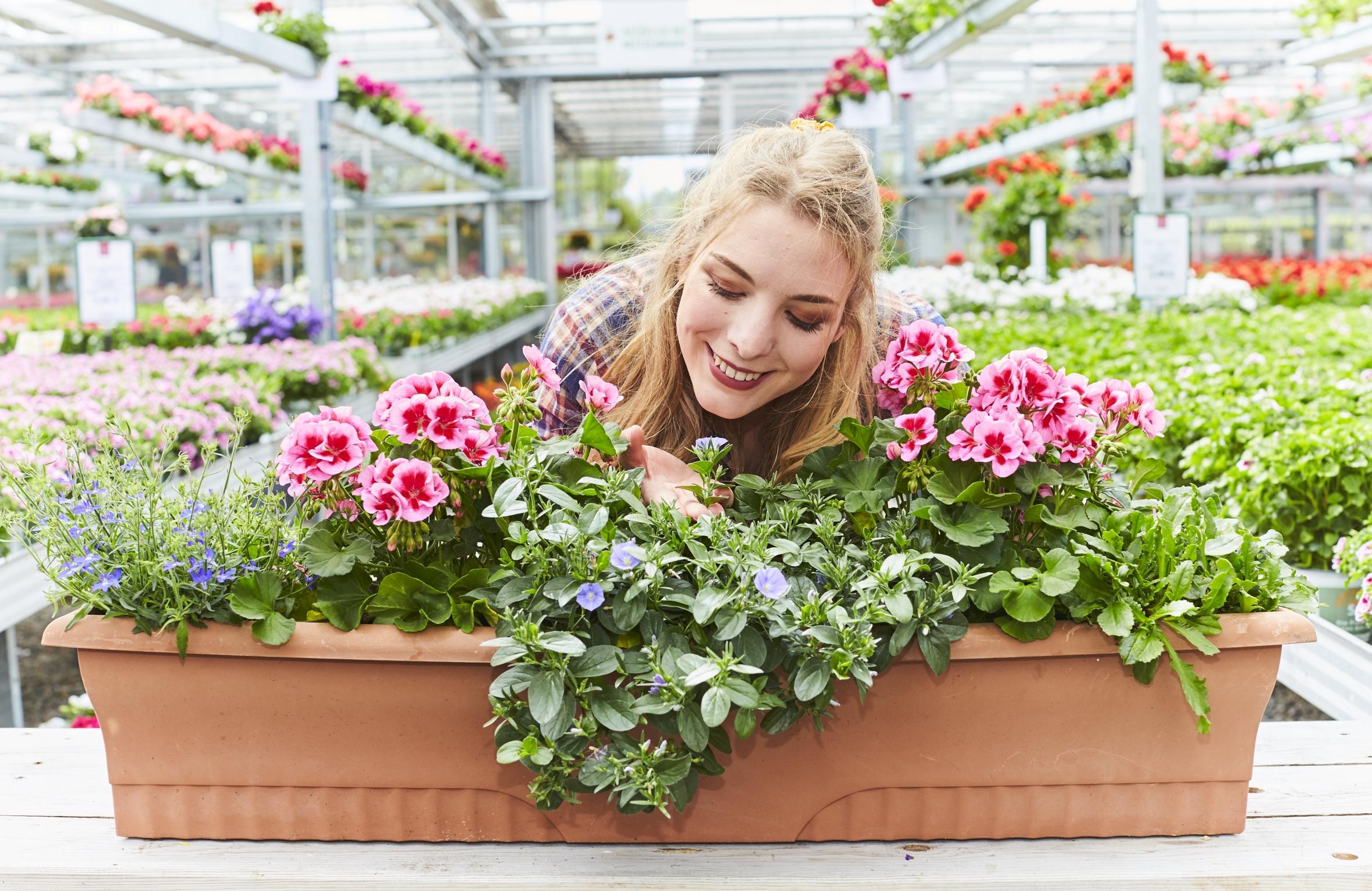 Lust auf besondere Pflanzen? Neuheiten gibt es bei den Gartenprofis