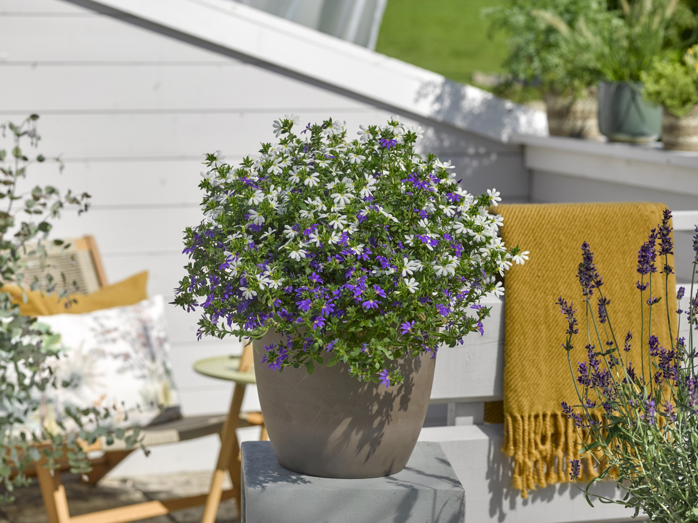 """Mit dem """"Himmlischen Duo"""" werden Garten, Terrasse und Balkon zum Paradies auf Erden"""