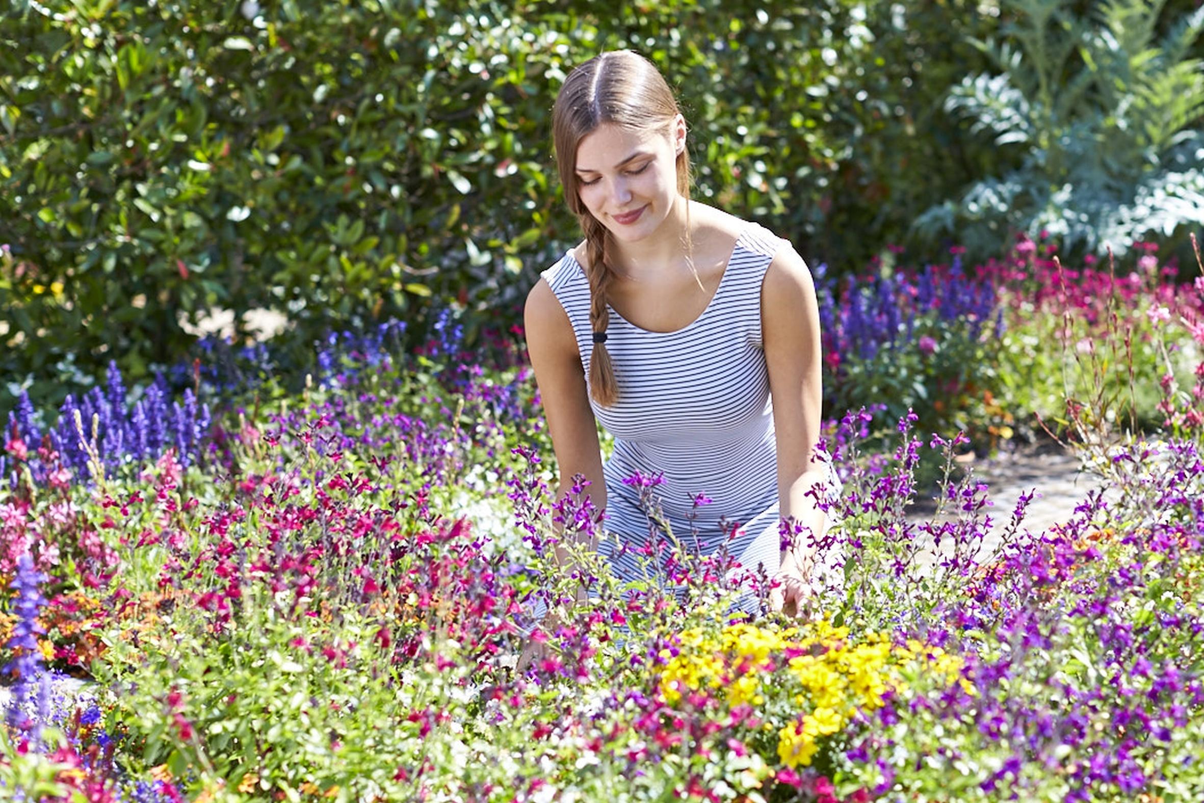 Für mehr Bestäubervielfalt im Garten: Der Mix aus einjährigen Pflanzen und Stauden als vielseitige Nahrungsquelle für Insekten