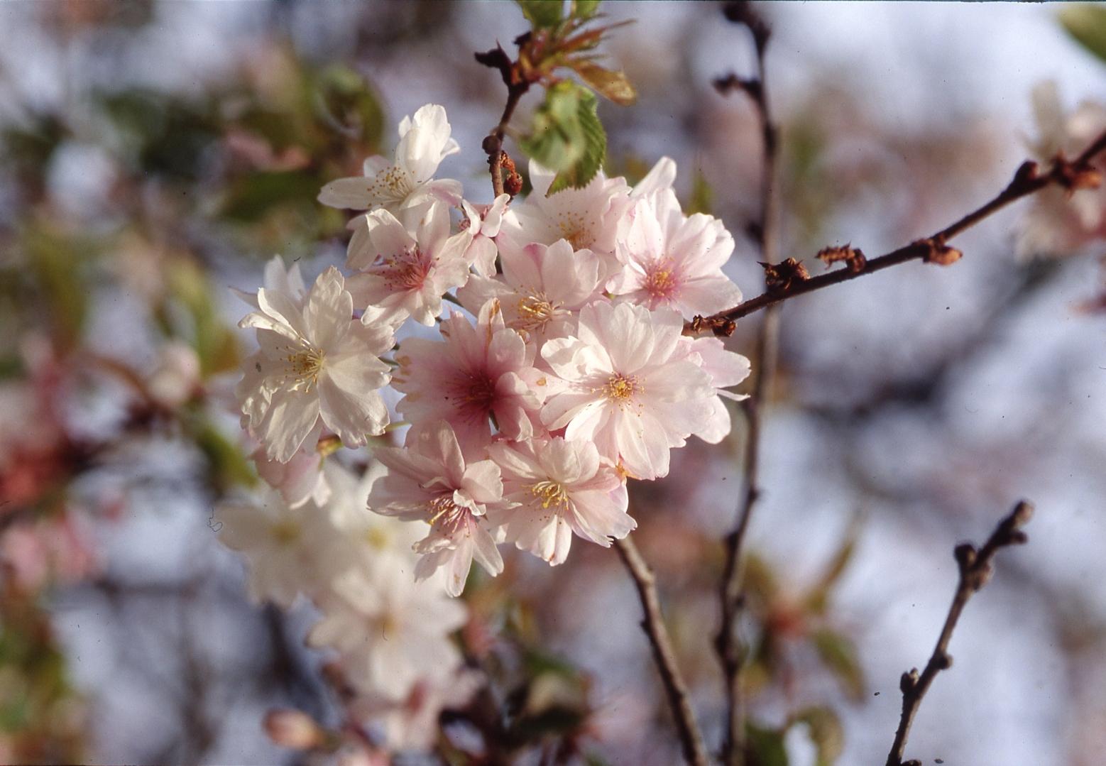 Von einer Blüte zur nächsten – insektenfreundliche Gehölze im Jahresverlauf